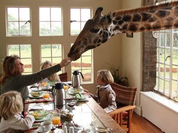 nairobi-giraffe-manor-breakfast